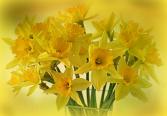 Happy Daffodiles