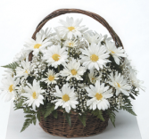 Happy Daisy Basket Sympathy Tribute