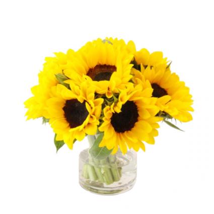 Happy day  Sunflowers