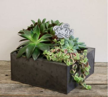 Happy Father's Day! Succulent Planter