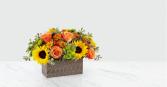 Happy Harvest Garden™ 19-F3