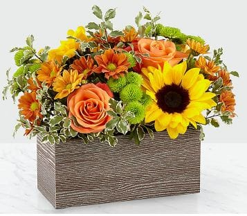 Happy Harvest Garden 19-F3