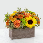 The FTD Happy Harvest Garden Any Occasion  in Weatherford, Texas | Nana's Place Flowers and Gifts