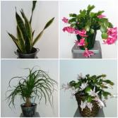 Happy Houseplants Live Plants