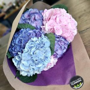 Happy Hydrangeas Cut Bouquet in Saskatoon, SK | QUINN & KIM'S FLOWERS