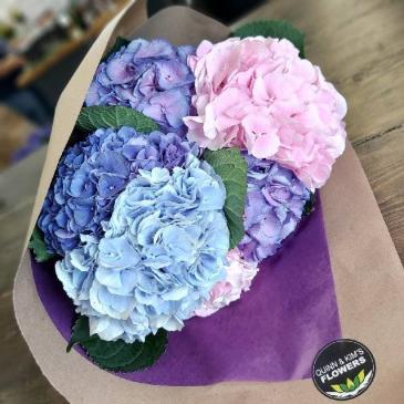 Happy Hydrangeas Cut Bouquet