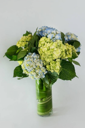 Happy Hydrangeas Vase Arrangement...Vase May Vary  in Paradise, NL | PARADISE FLOWERS & GIFTS