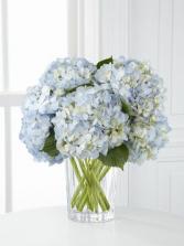 Happy Hydrangeas White Hydrangeas in vase