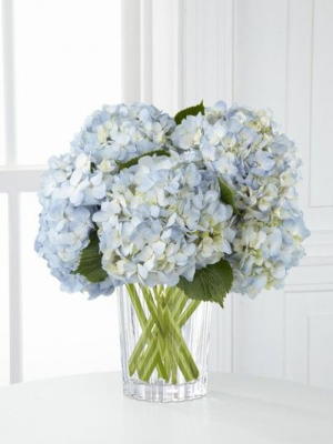 Happy Hydrangeas White Hydrangeas in vase in Union, MO | Sisterchicks Flowers and More LLC