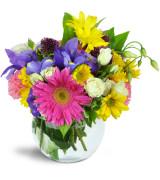 Happy in Colours - 414 Flower Arrangement