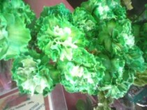 Happy St. Patrick's Day!! Green Carnations Available March 12