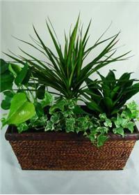 Hardy Houseplant