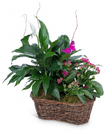 Harmony Basket with Butterflies Plant