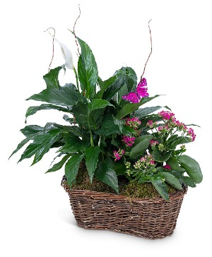Harmony Basket with Butterflies Plant in Nevada, IA | Flower Bed