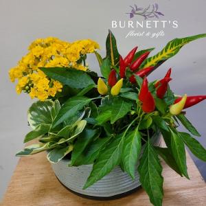 Harvest Fall Planter in Kelowna, BC | Burnett's Florist