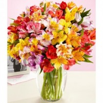 Have a Happy Day...Weekly Special! An Alstroemeria Lily Array of Blooms