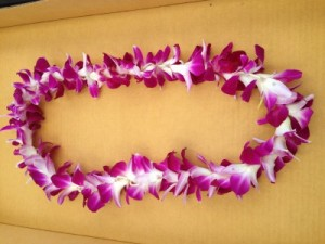 Hawaiian Bombay Orchid Lei Graduation  Lei in Santa Barbara, CA | Lily's Flowers And Fruity Florets