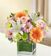 Healing Tears - Multicolor Pastel Funeral - Sympathy