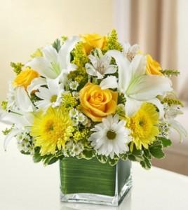 Healing Tears Yellow and White