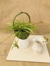 Healthy Habitat Green Splant