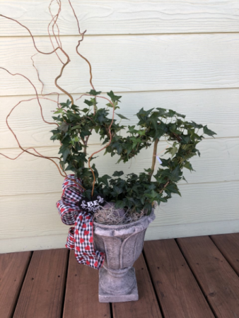 Heart Ivy Plant
