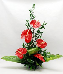Heart Shaped Anthurium Fresh Flowers