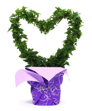 Heart Shaped Ivy Topiary