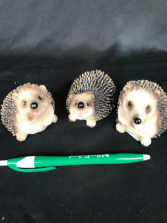 Hedgehogs Hedgehogs