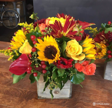 Hello Sunflower Fall