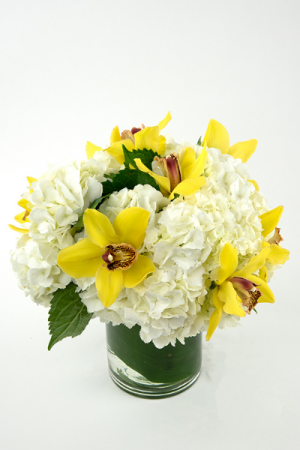 Hello sunshine Round bqt in Falls Church, VA | Geno's Flowers