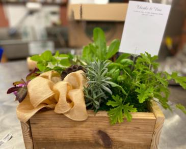 Herb Box Plants