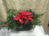 Herb Garden + Poinsettia