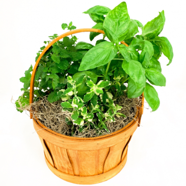 Herb Trio Planted Basket