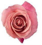 Hermosa Rose