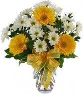 LARGE YELLOW GERBERA DAISIES ARRANGED WITH WHITE  DAISIES IN A CLEAR VASE AND BOW!!