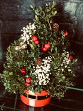 Holiday Boxwood Tree