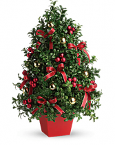 Holiday Boxwood Tree Holiday Arrangement