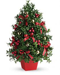 Holiday Boxwood Tree Holiday Arrangement