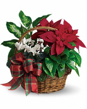 Holiday Cheer Plant Basket