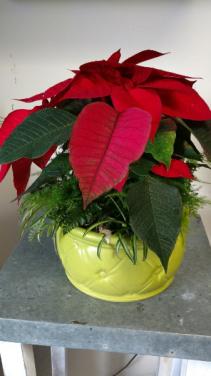 Holiday Combo Bowl Planter