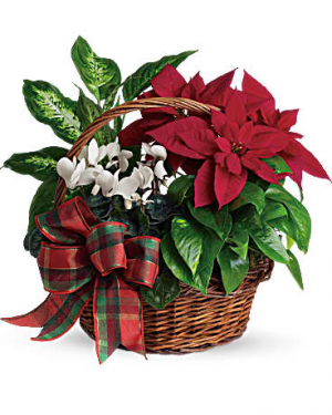 Holiday Homecoming Basket by Teleflora  in Valley City, OH | HILL HAVEN FLORIST & GREENHOUSE