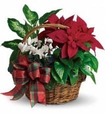 Holiday Homecoming Basket House plants