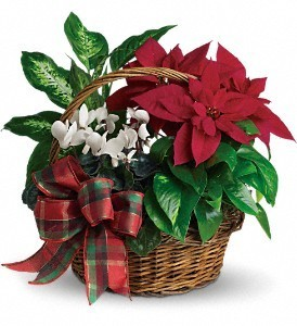 Holiday Homecoming Basket House plants