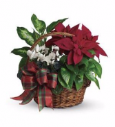 Holiday Homecoming Basket - Teleflora Dish Garden
