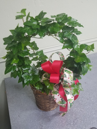 Holiday Ivy Wreath Plant Green Plant