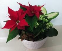 Holiday Mixed Planter