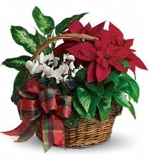 Holiday Plant Basket Blooming Plants