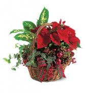 Holiday Planter Basket Christmas Plants