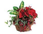Holiday Planter Basket        TF102-1 Holiday Plant Assortment
