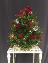 Holiday Splendor Fresh Boxwood Tree
